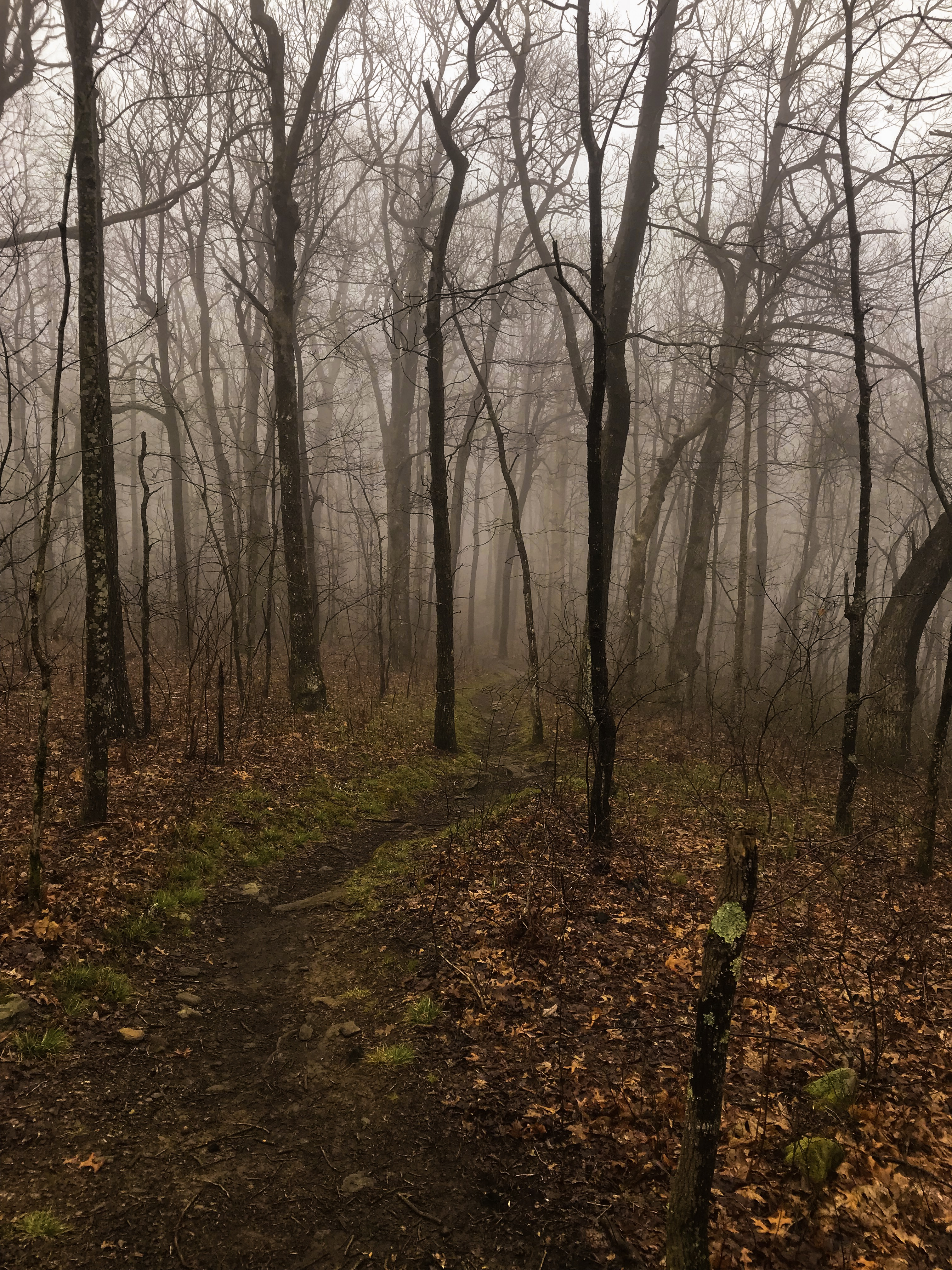 Bernies Trail Life